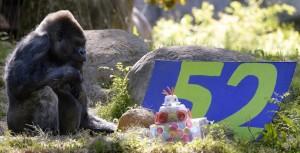Buon Compleanno per i 52 anni