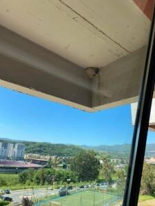 Rondini dalla finestra della scuola di Castrolibero